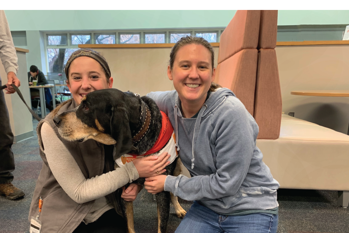 Blue tick coon hound dog gets petted