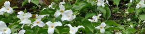 University of Tennessee Herbarium